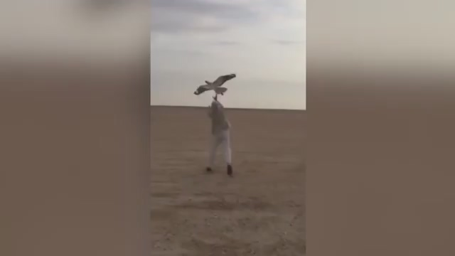 Watch falcon take down robot eagle in epic battle of nature versus technology.mp4_20151128_085515.734