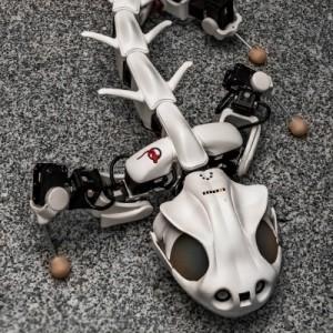 蝾螈机器人
